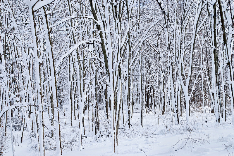 Snow Storm January 26 2011