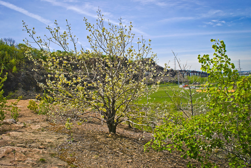 """""""Snake Hill Tree""""<br /> An interesting tree with Spring blossoms in the foreground of this Snake Hill view."""