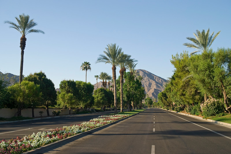 A scenic look of a palm tree lined road near Palm Springs California.