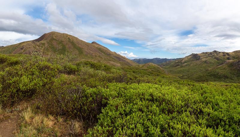 Spring Denali Landscape