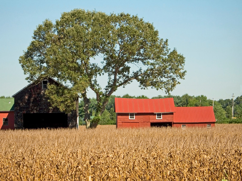 """""""Harvest Farm""""<br /> <br /> A rural farm scene in late Summer i Monmouth County, New Jersey."""