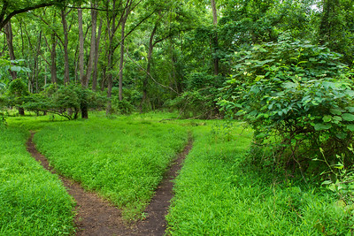 Two Path Woodlands