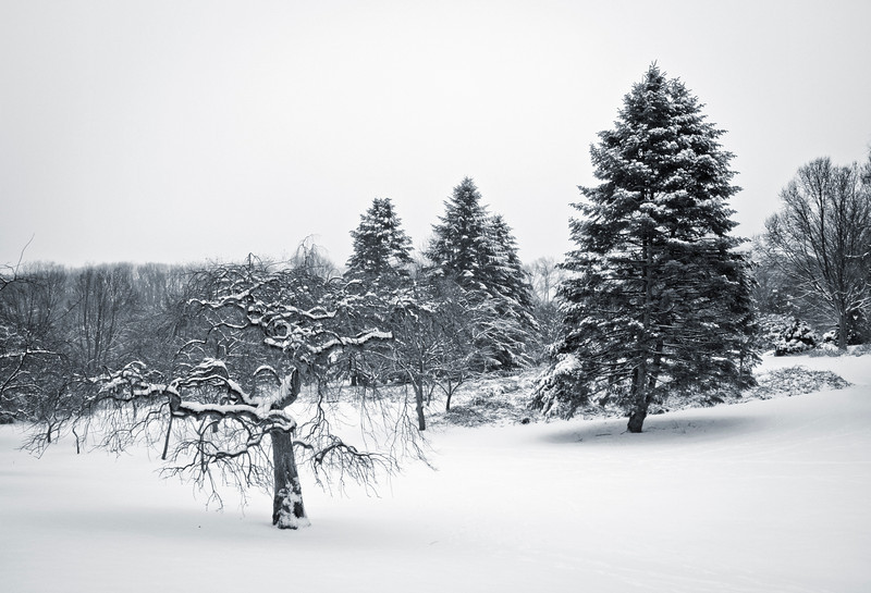 Still Winter Scene