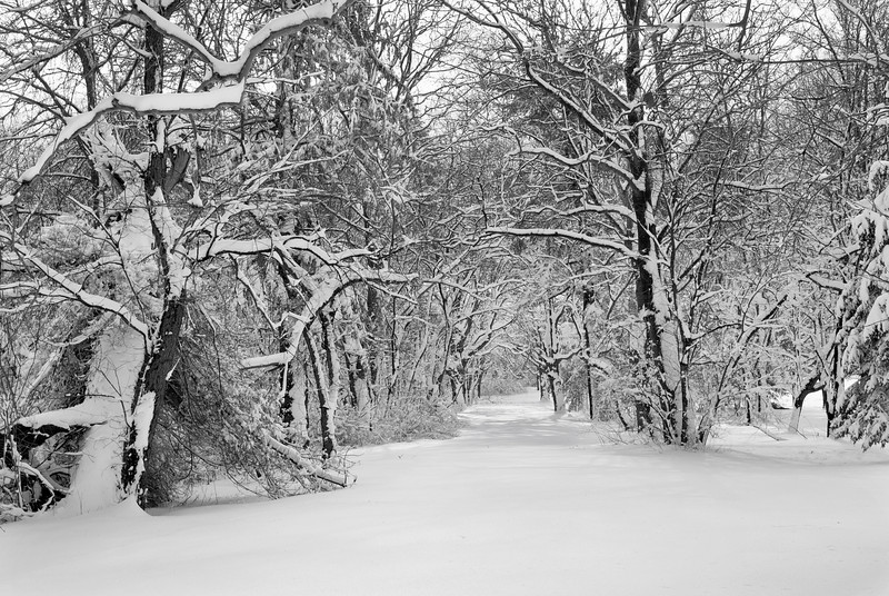 """""""Snow Path""""<br /> Snow Storm January 26 2011, A park in Freehold, New Jersey."""