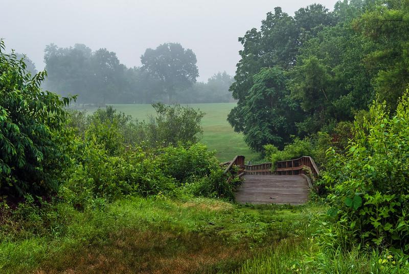 Bridge in Meadow