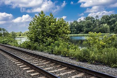 Tracks Along the Pond