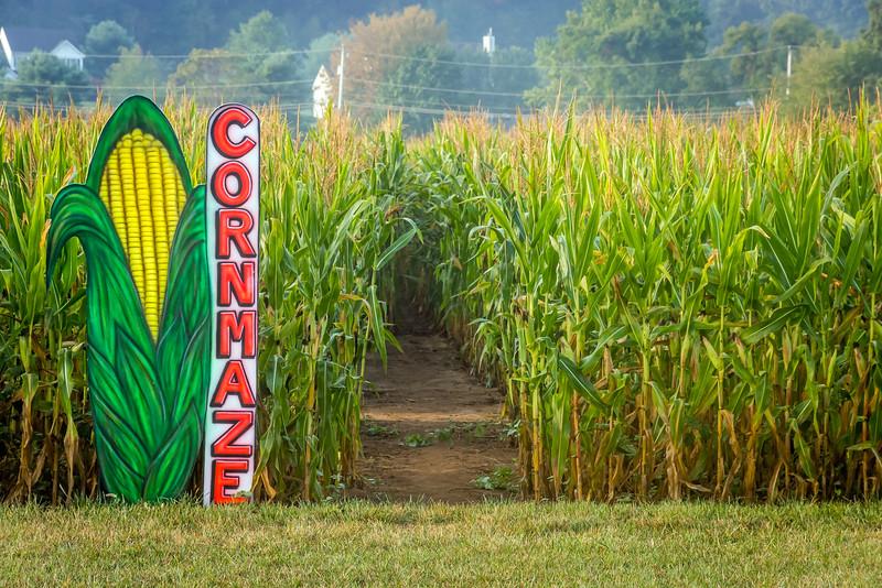 Cornmaze in Cornfield