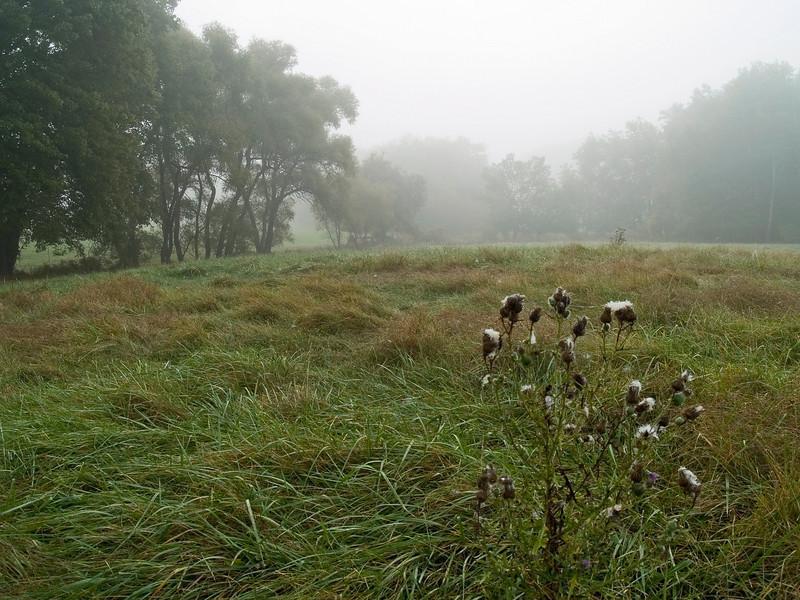 FoggyMeadow07