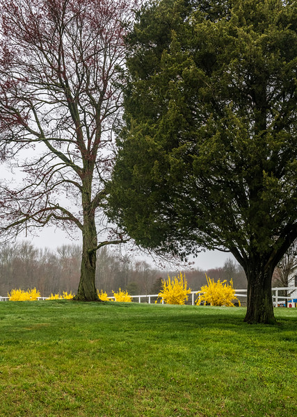 Spring Front Yard