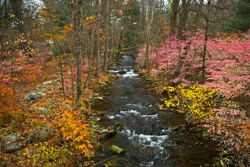 """Brilliant Autumn""<br /> Bright interesting Fall colors surround this stream passing though this Pocono Mountain woods."