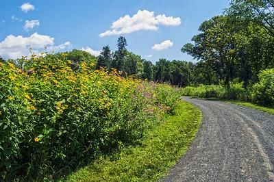 Road Through Meadows