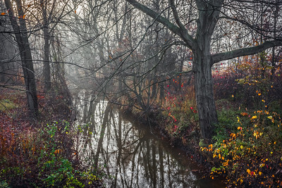 Morning Fog on Creek