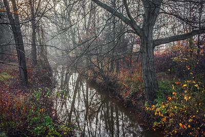 Morning Fog on Creek