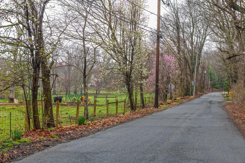 Spring Rural Road