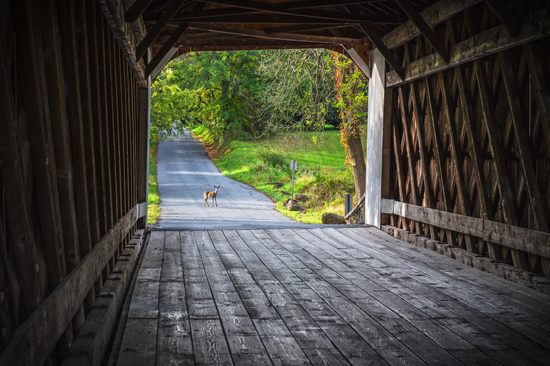 Covered Bridge Deer