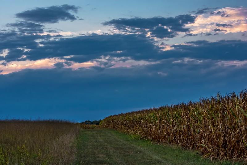Dusk Light Through the Fields