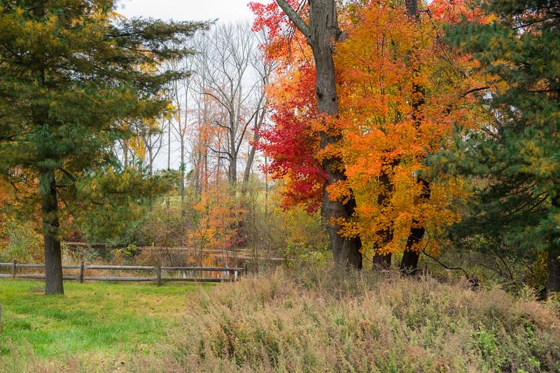 Big Brook Landscape
