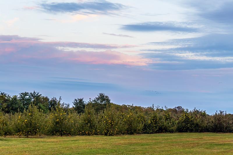 Apple Orchard Sunset