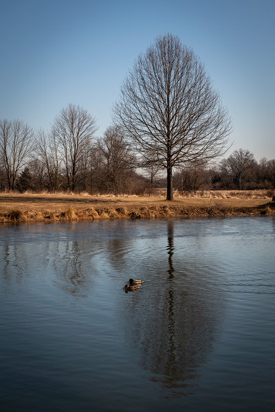 Two Ducks and a Tree