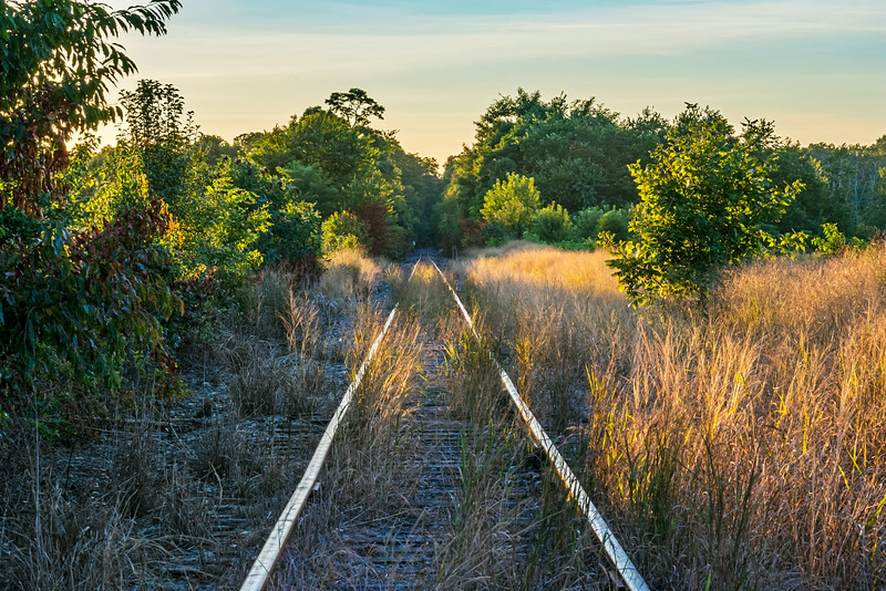 Over Grown Tracks