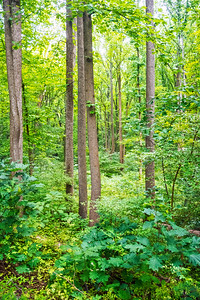 Green Forest Maryland