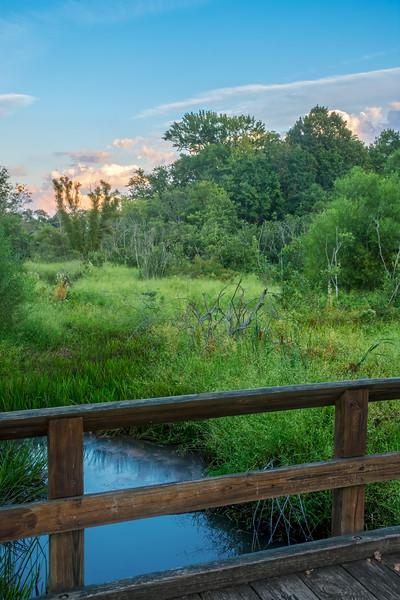 Woodland Bog at Dusk