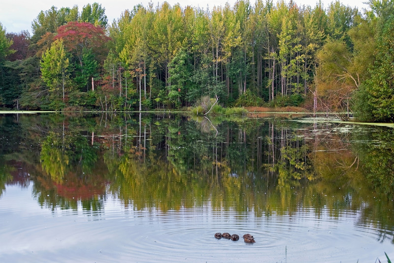 """""""Autumn Pond""""<br /> A quiet pond in the Fall near Manasquan Reservoir in Monmouth County, New Jersey."""