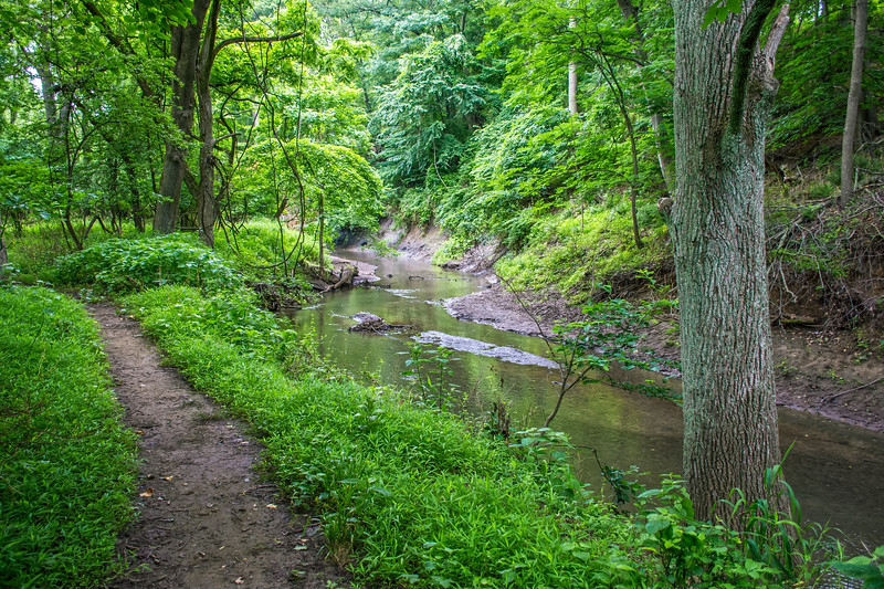 Trail Along Stream