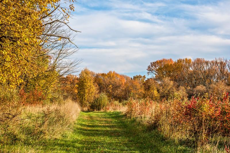 The Autumn Trail