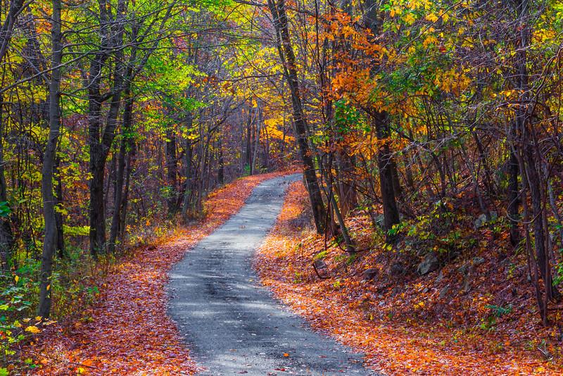 Narrow Autumn Road