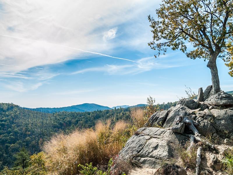 Tree Overlooking Shenandoah