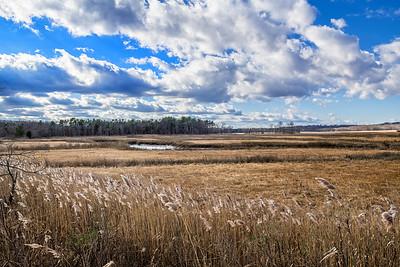 New Jersey Salt Marsh