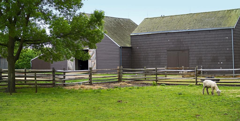 Barnyard Panorama