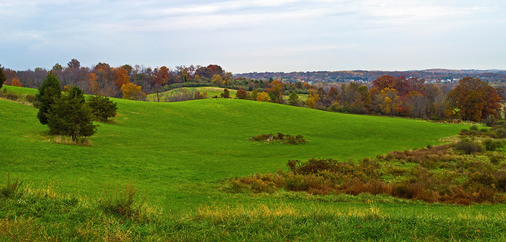 Hillside Panorama