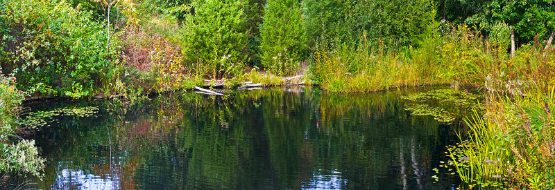 Summer Pond Panorama
