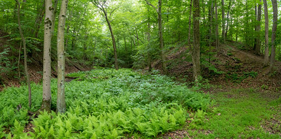 Ferns Landscape Panorama