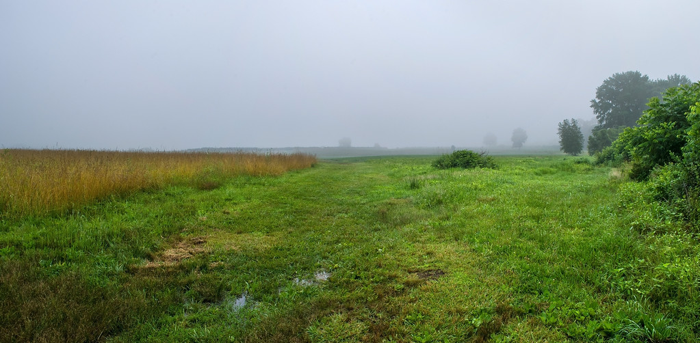 Foggy Meadow Panorama
