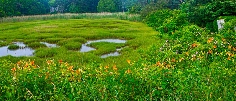 """Massachusetts Wetland Panorama"""