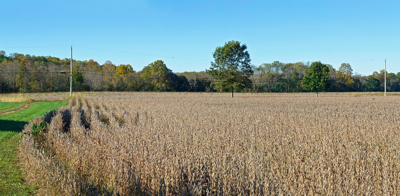 Autumn Field Panorama