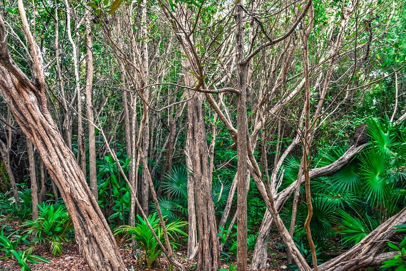 Jungle Contrasts