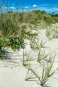 Saw Grass and Dunes