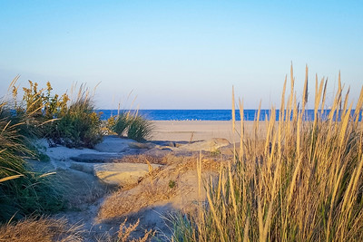 """""""Natural Sandy Hook"""" A scenic view from the sand dunes on Sandy Hook along the Jersey shore."""