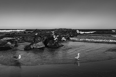 Seagulls and Jetty BW