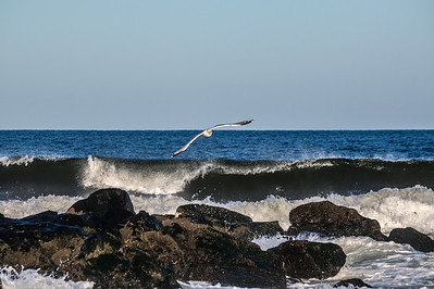 Seagull Over Jetty