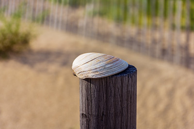 Clam Shell on Post