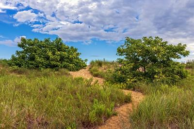 Path on the Sand Dunes