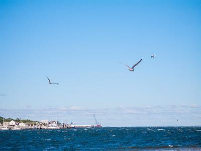 Seagulls Over Sandy Hook Bay