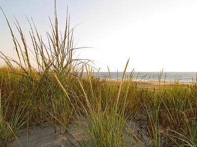 Sand dune grasses along the beach in Sandy Hook National Recreation Area along the Jersey Shore.