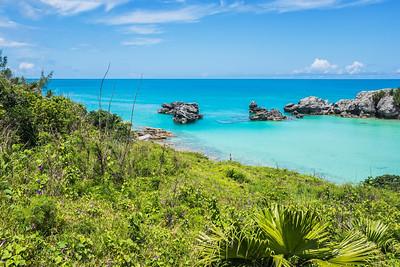 Natural Bermuda