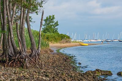 Shoreline Roots